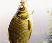 冬季野钓不同鱼种的选漂技巧