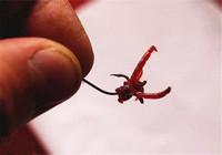 6种用红虫钓鱼的方法