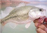 从钓鲈鱼的过程看钓鱼与天气的关系
