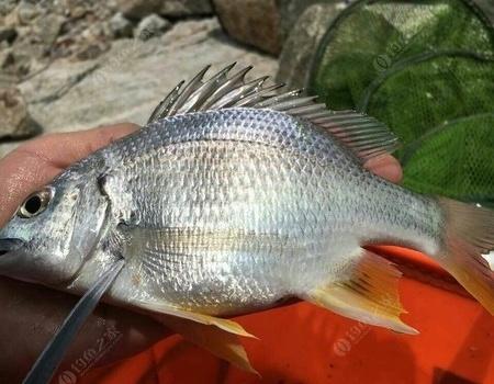 淺談第一次海釣