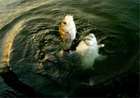 冬季钓鲫鱼的五大注意事项