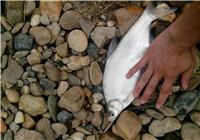 野钓鳊鱼的三款饵料与位置选择思路