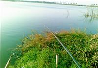 钓友坑塘垂钓解毒收杆鱼获高达70斤