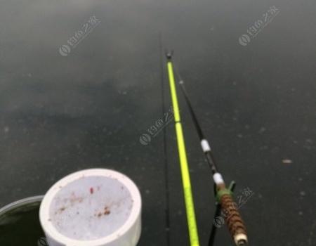 新年首爆,长竿短线开光三小时连拔 红虫饵料钓鲫鱼