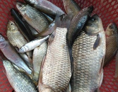 今天这鱼获来的有点莫名其妙 钓鱼之家饵料钓马口鱼