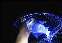 资深钓鱼人的20个夜钓技巧