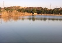 茅湖垂钓中心
