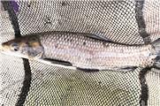 新年分享垂钓渔获爆护日记