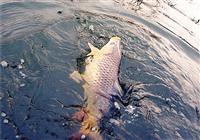 脫鉤的原因及防跑魚技巧詳解