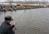 浅谈坑塘钓养殖鱼与野钓的区别