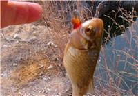 解析冬季钓鱼的打窝与鱼饵选择技巧