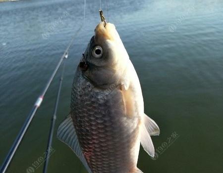 01.29綻放在嚴寒中的釣魚人