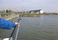 学会根据鱼情来制定调漂技巧