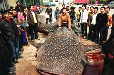 图片汇总那些早年被钓鱼人抓获的巨物