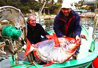 图片汇总那些早年被钓鱼人抓获的巨物续