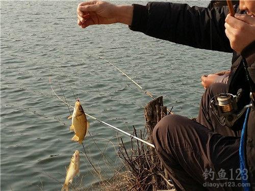 釣鯽魚餌料配方
