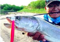 《藍旗魚小汐路亞視頻》地球尋夢|哈拉哈河的冷水魚 第3集 哲羅占狗位