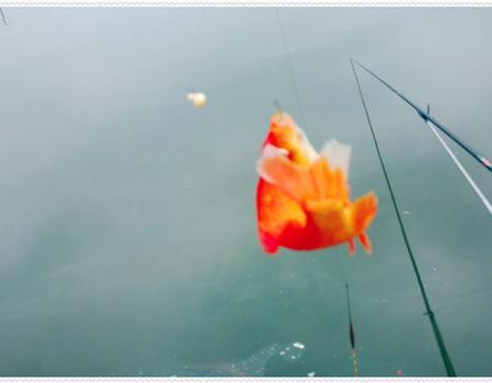 《原创》假日雨前出钓 鱼情不熟惨淡