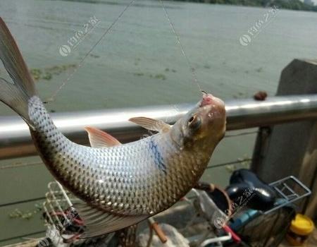 年度總結——2017游釣東江的小楊