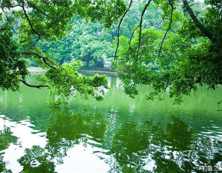 刮风天野湖钓鳊鱼罗非打窝一分时时彩技巧 分享