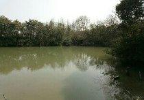 大河池钓场