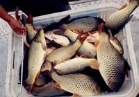 气温转凉时台钓鲤鱼的一些北京快乐8官网