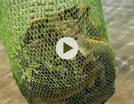 本地的魚,外來的人,游釣第一站,邕江!