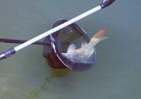 野钓最常见的脱钩跑鱼原因