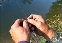 《三本先生》传统钓第78期 公路边水塘逗钓小鲫鱼