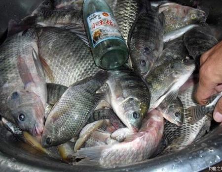 釣魚還是游釣深山水庫過癮。 化氏餌料釣羅非魚