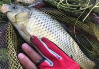 ?#20960;?#20116;尺沟 垂钓渔获集锦分享