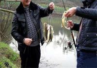 """以三十年钓鱼经验教你一招——""""抖灰面"""",学会这招你也是高手!"""