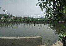 松桥生态钓鱼休闲中心
