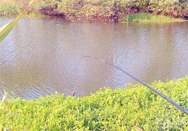鲴鱼的钓法_抛竿钓之钓位、饵料选择技巧_钓鱼人必看