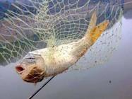 野钓如何判断鱼儿进窝?学这一招就够了~