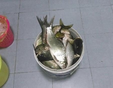 天堂山水庫,恩,滿滿的魚。 自制餌料釣羅非魚