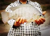 浅谈钓罗非鱼时如何选择渔具装备