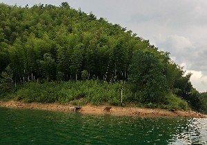 太平湖野钓场