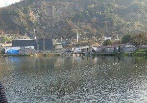 樟湾老刘青鱼塘