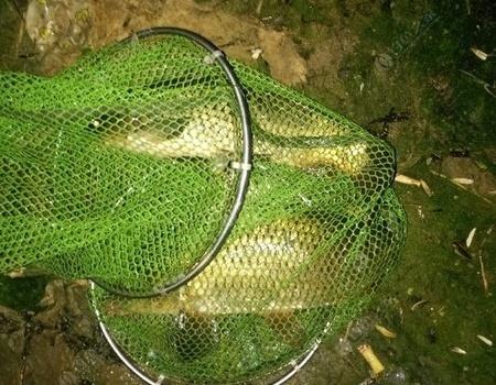 2018第一次钓得鲤鱼!
