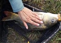 春季野钓鲫鱼和鲤鱼有什么技巧?这5个要点要记牢!