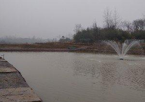 平桥工业园李园垂钓