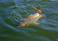 钓鱼人春季钓鱼必须了解的3件事