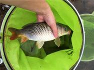 春季钓鱼的三点注意事项 早春出钓一定要记牢!