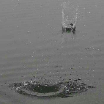 绝望的生鱼片918