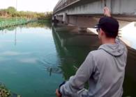 《麦子钓鱼》钓鱼实战54桥下好钓点,短尺疯上鱼