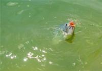 在江河钓鱼的时候选择钓位的技巧