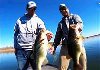 《路亚视频》路亚三人组作钓产卵前期大鲈鱼