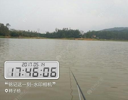 淡水振业城水库野钓 龙王恨饵料钓鲮鱼