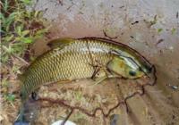 春末夏初钓草鱼有哪些值得借鉴的技巧